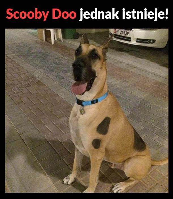 Scooby Doo jednak istnieje
